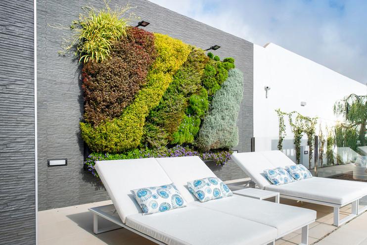 Mur végétal Acacia Silvi