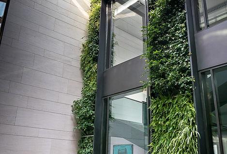 Façade végétalisée villa vertiss