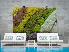 mur vegetal green wall - Acacia Silvi