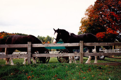 horse farm photos-2