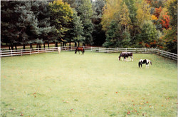 Horses 2-2