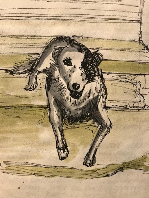 Wandering Dog