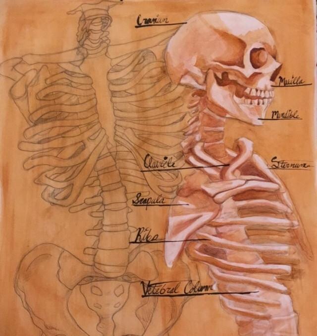 Anatomical Rendering