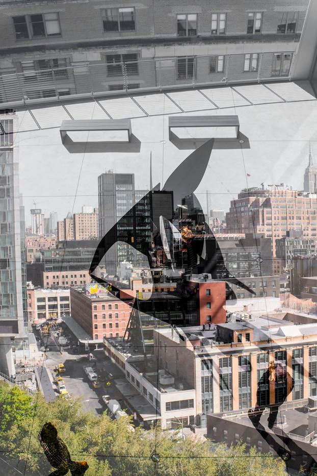 new-york city [12]