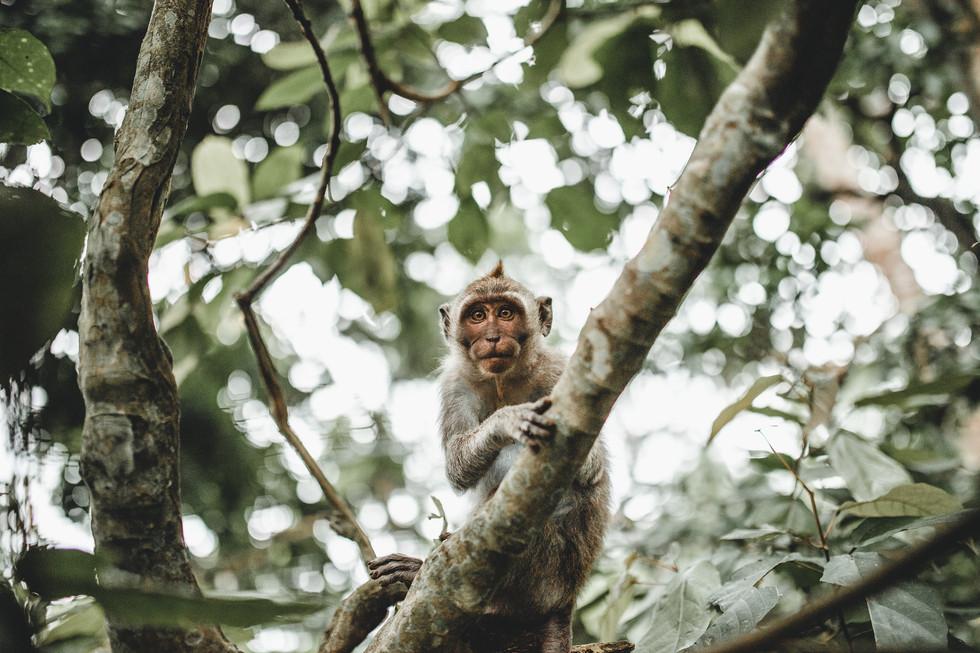 Sacred Monkey Forest Bali
