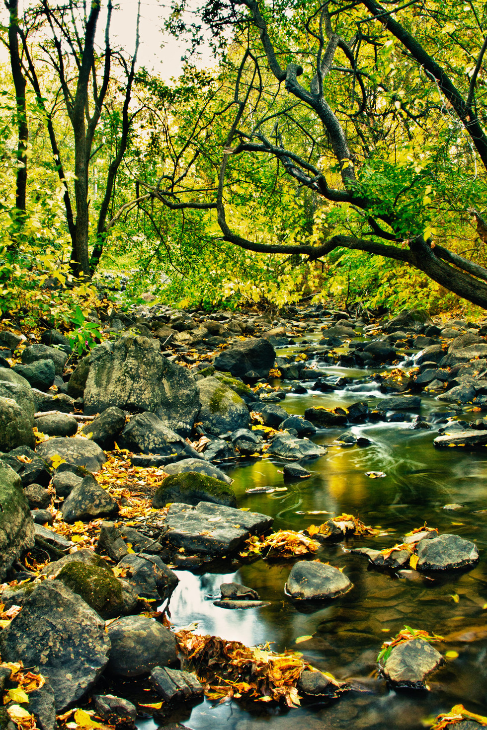 McVicker Creek