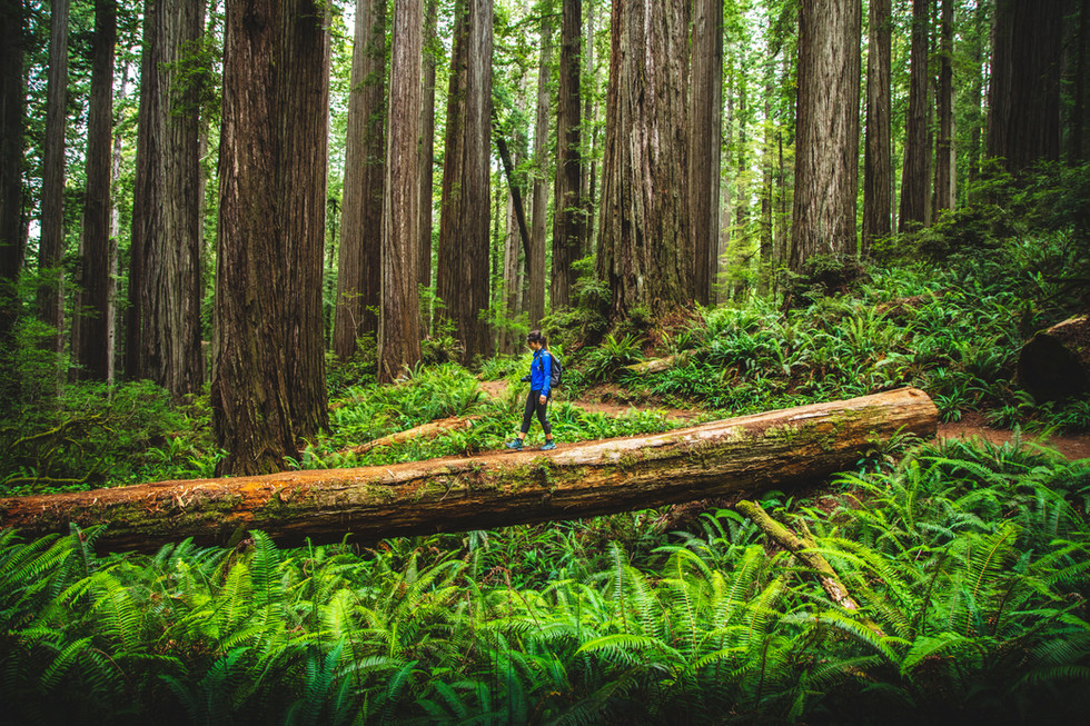 Jedediah Smith National Redwood Park