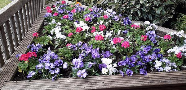 Ashtead PMH - tidy up of flower beds.jpg