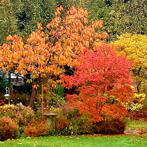 Ashtead WI - Autumn Photos courtesy of A