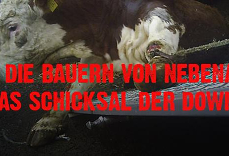 Erfolg! Schlachthof Düdenbüttel gibt auf