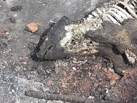 Verbrannte Leichen in der Gülle