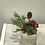 "Thumbnail: Holiday Succulent Arrangement 3"""