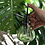 Thumbnail: Plant Lady Club Kit