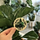 Thumbnail: Crazy Plant Lady Iron On Patch