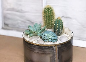 Loving this succulent and cactus arrange