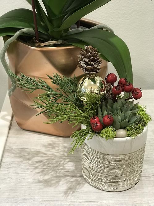 "Holiday Succulent Arrangement 3"""