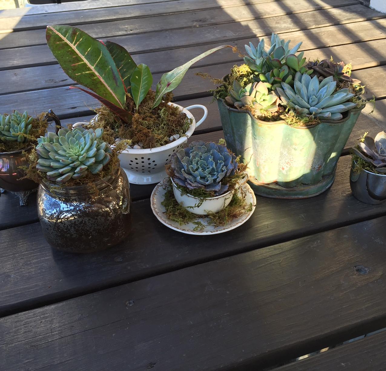 First Plant Arrangements