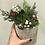 "Thumbnail: Holiday Succulent Arrangement 5"""
