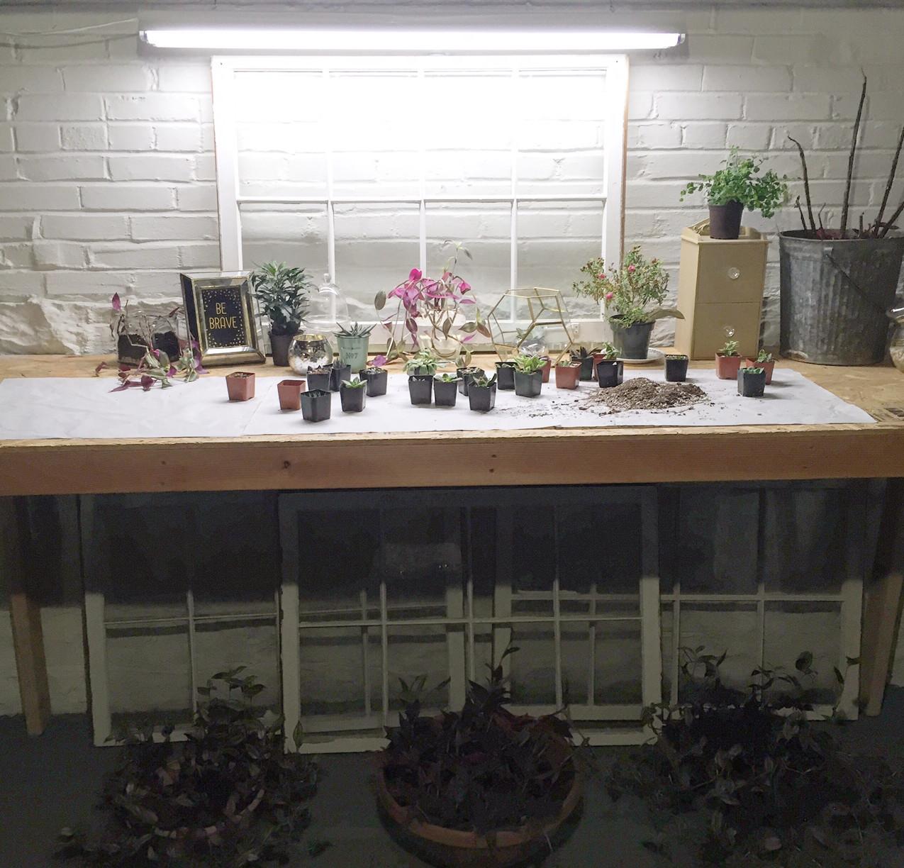 Plant Lair Grows