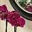 Thumbnail: Fuchsia Orchid