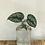 "Thumbnail: Bottle Bud Vase 4.75""x2.5"""