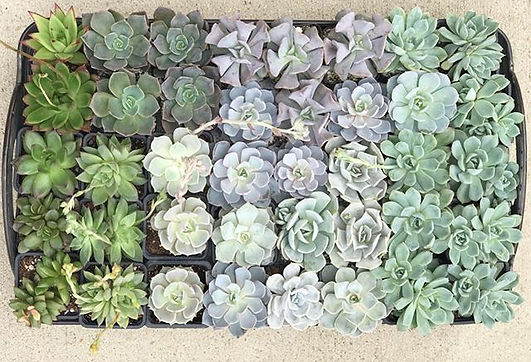 Prepping for some big succulent planting