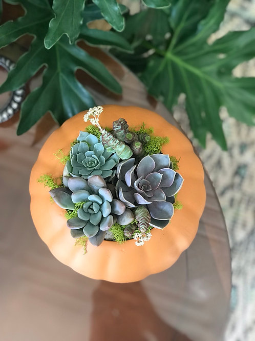 Orange Ceramic Pumpkin Succulent Arrangement - 8""
