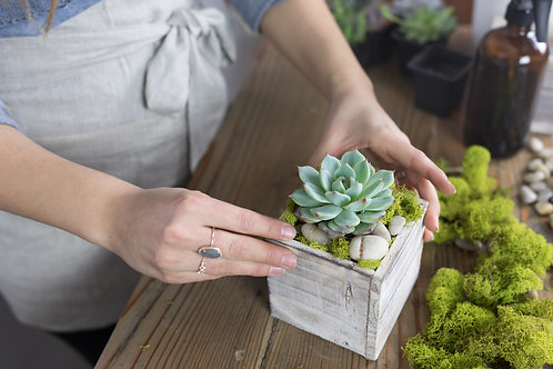 DIY Succulent Kit