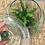 Thumbnail: Terrarium with Lid (plants sold separately)