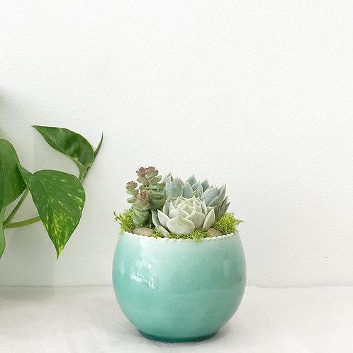 Rachel Akin Ombre Aqua Pot Succulent Arrangement
