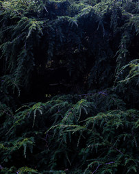 kamide_botanicalgarden_flora-2670.jpg