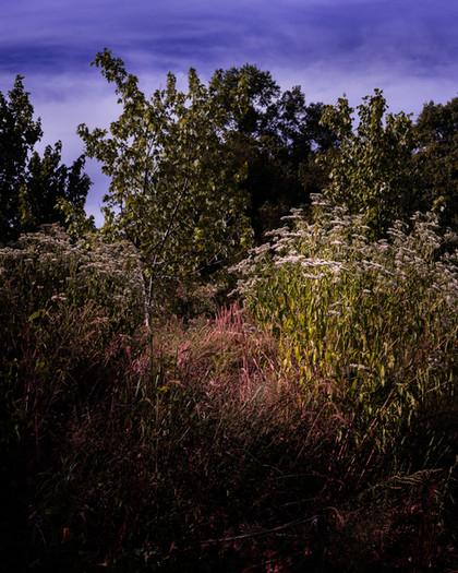 kamide_botanicalgarden_flora-2680.jpg