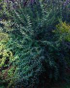kamide_botanicalgarden_flora-2731.jpg