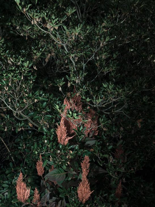 kamide_botanicalgarden_flora-2710.jpg