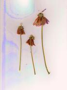 kamide_PlantScans--9_1.jpg