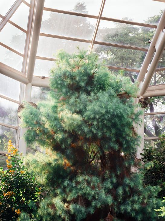 kamide_botanicalgarden_flora-2862.jpg