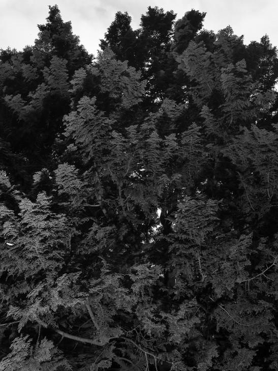 kamide_botanicalgarden_flora-2722.jpg