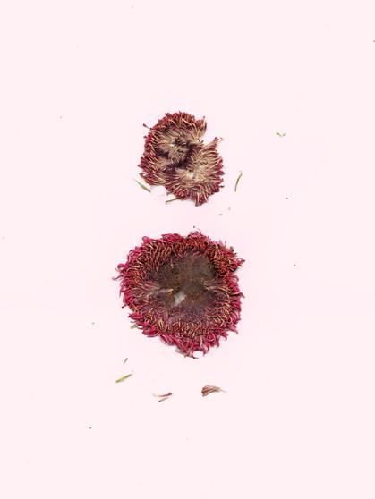 kamide_PlantScans-15_1.jpg