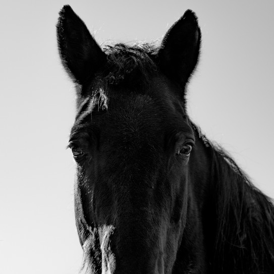 Kamide_Horses-6955.jpg