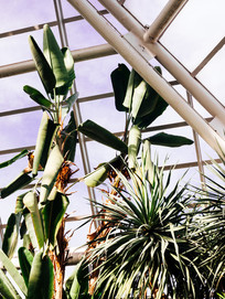 kamide_botanicalgarden_flora-2870.jpg