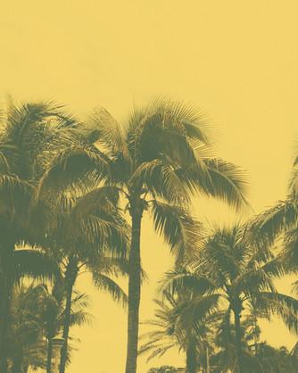 Kamide_Miami-3751-2.jpg