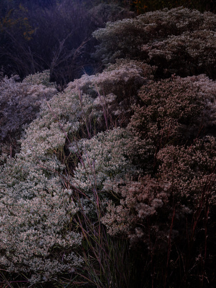 kamide_botanicalgarden_flora-2687.jpg