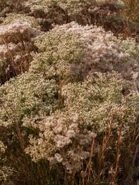 kamide_botanicalgarden_flora-2689.jpg