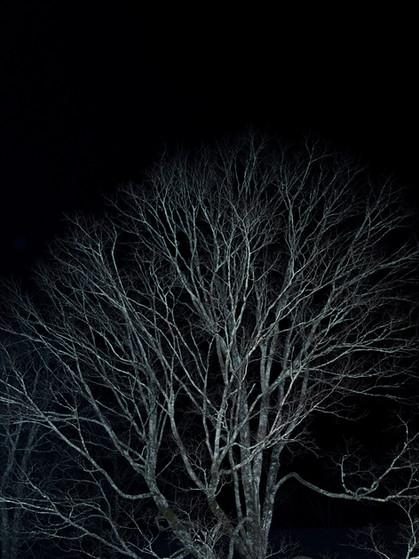 BALDING TREES