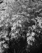 kamide_botanicalgarden_flora-2872.jpg