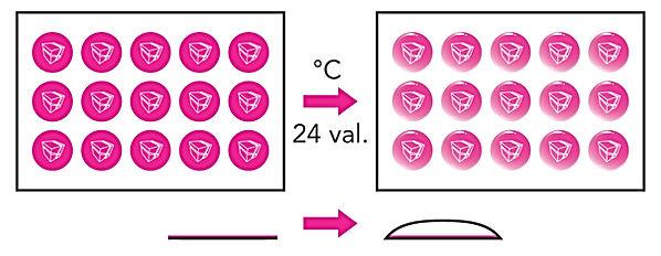 polimeras.jpg