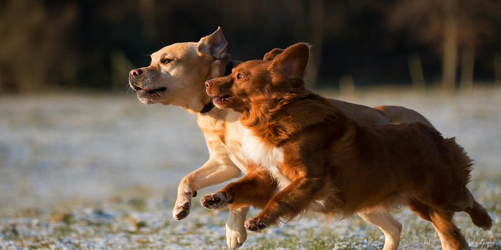 הרצאה דיגיטלית בזום : גינות כלבים