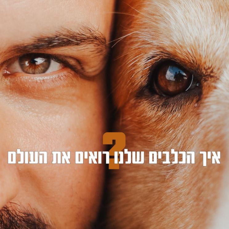 I See You - לראות את העולם דרך עיני הכלב