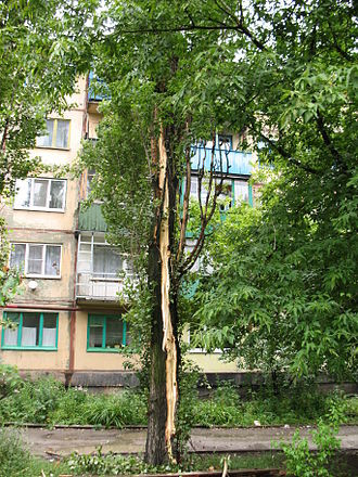 поврежденное молнией дерево