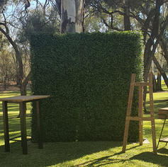 Green Wall - Box Hedge